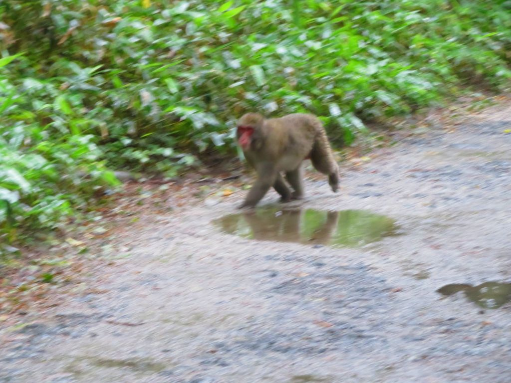 猿が現れました