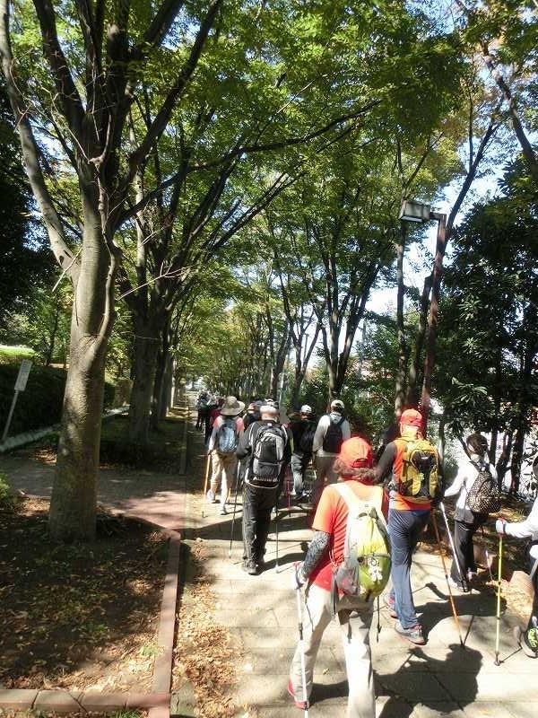 荏田南中学校横の並木道木陰をウォーキング