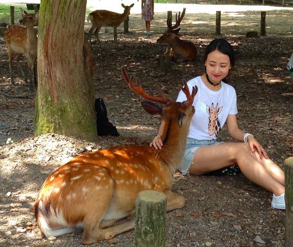 見つめ合う鹿とキリン