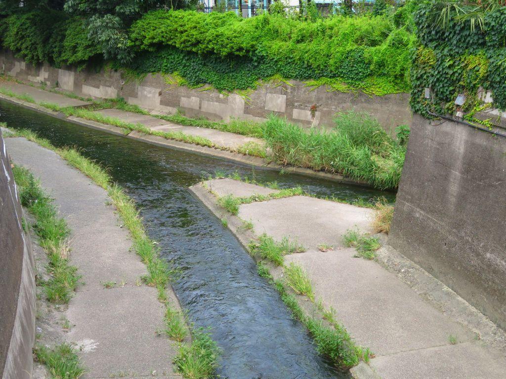 善福寺川と合流地点