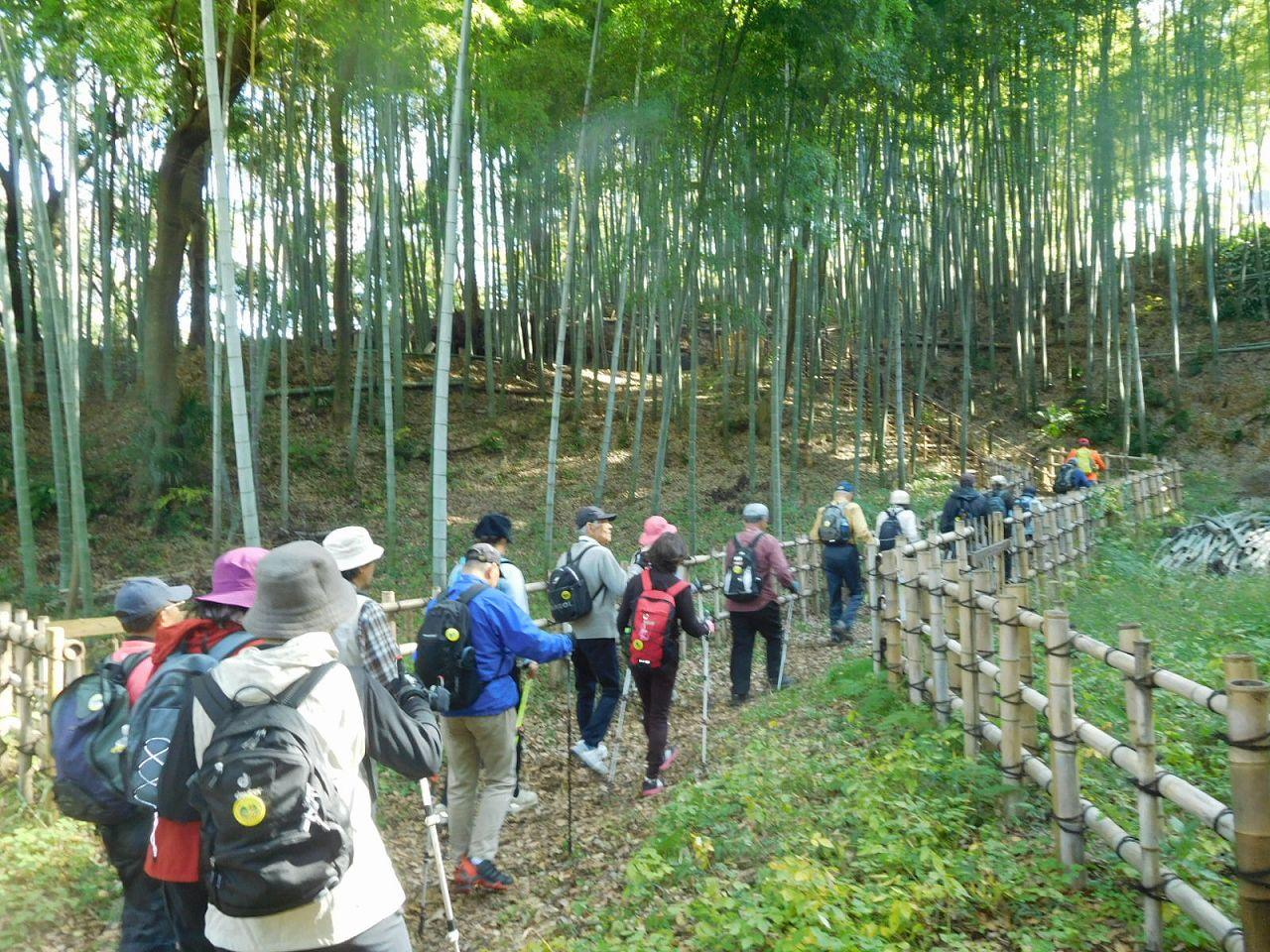 竹林の中を歩く