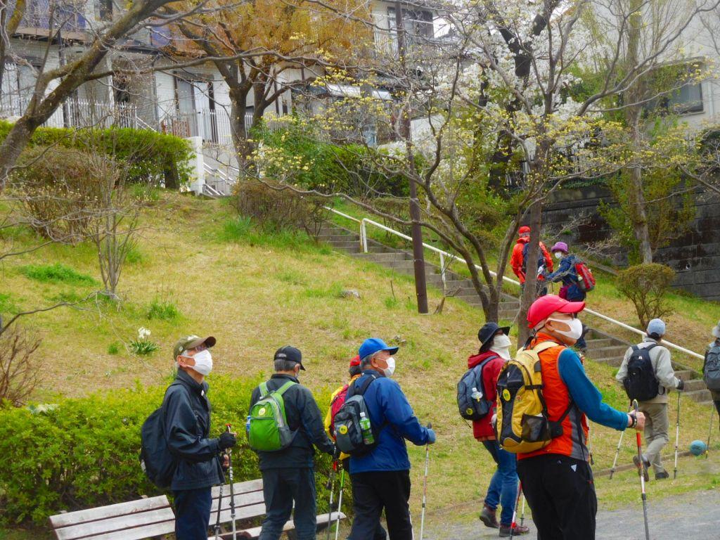 長谷第一公園の桜を見上げて歩く皆さん