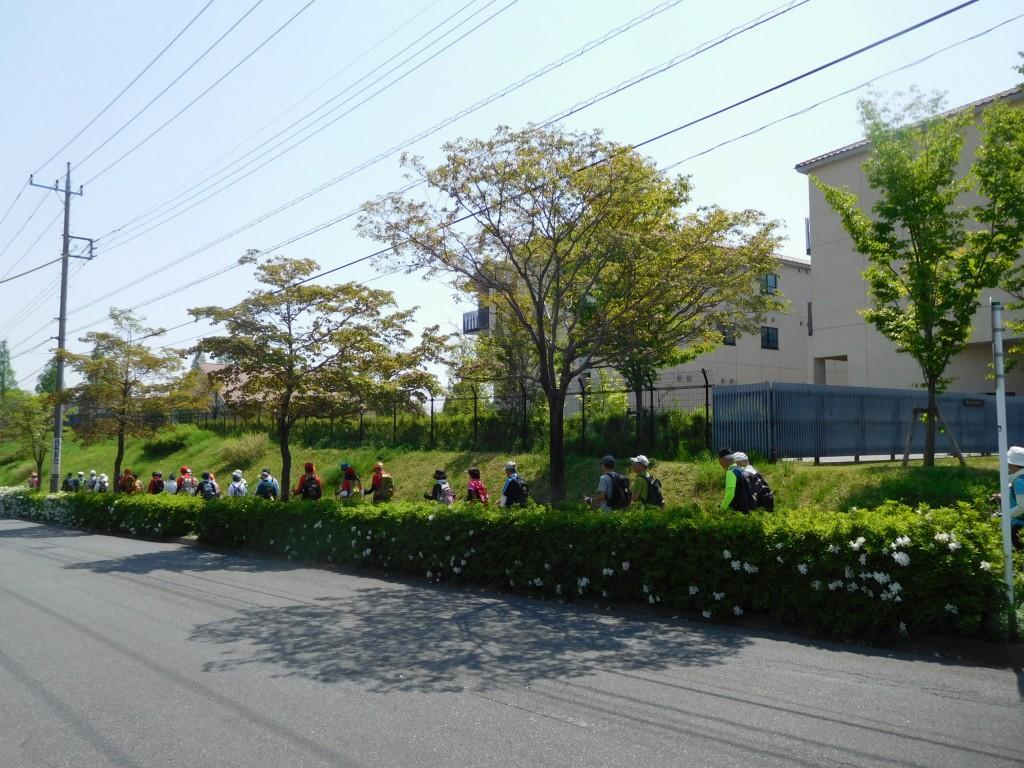 慶応義塾横浜初等部前をウオーキング(花水木とつつじ)