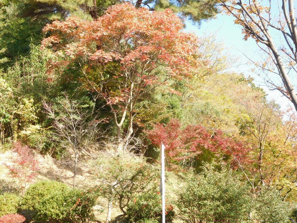 もえぎ野ふれあい樹林の紅葉