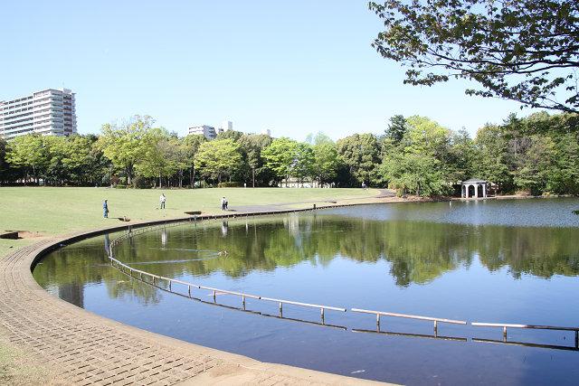 多摩中央公園内の池
