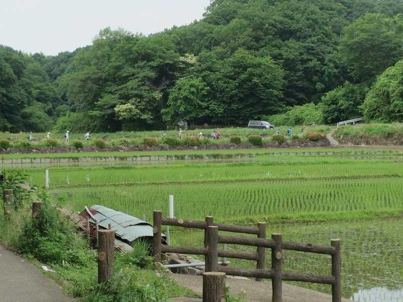 緑深き田園風景を眺めながらウォーキング