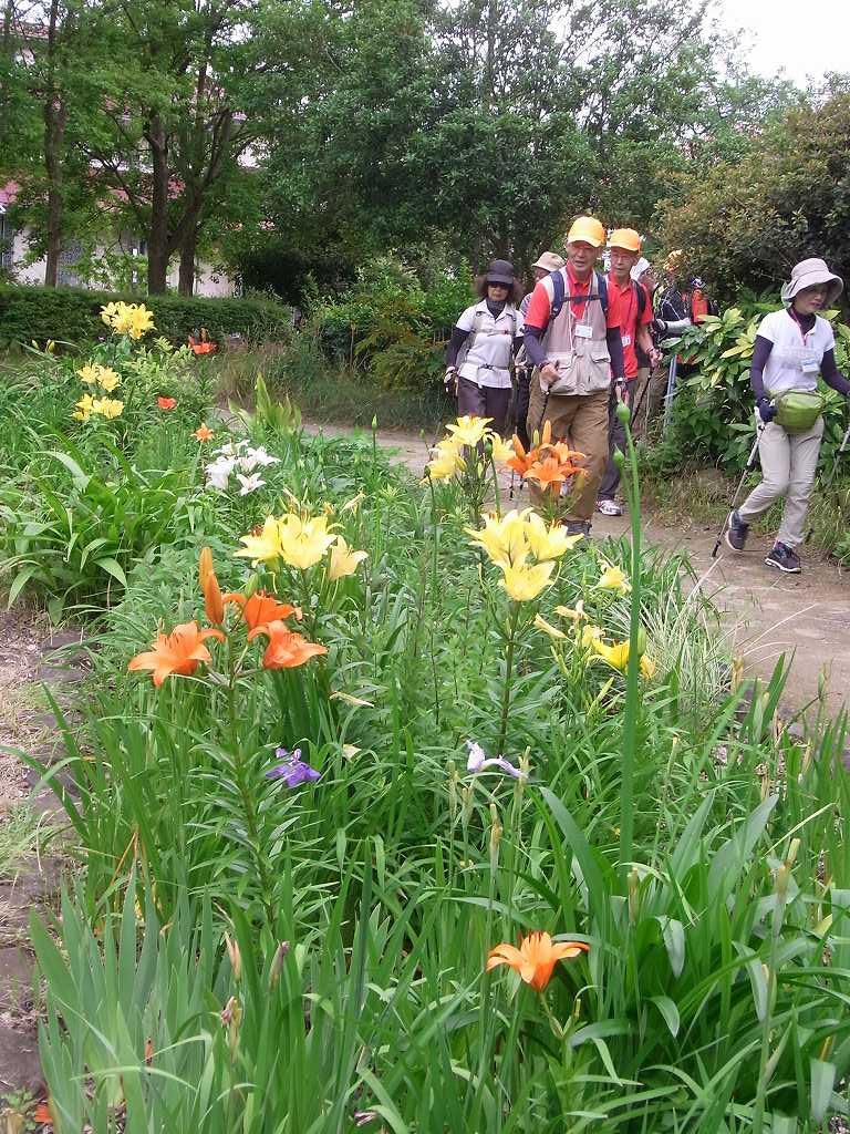 小黒公園では色とりどりの百合が咲いていました