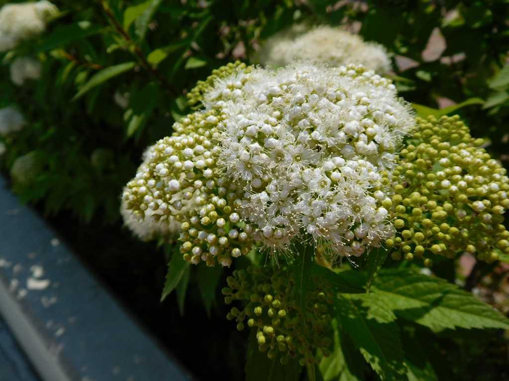 谷本公園保帰的運動広場入口の咲いていた花 何という花なのでしょうね
