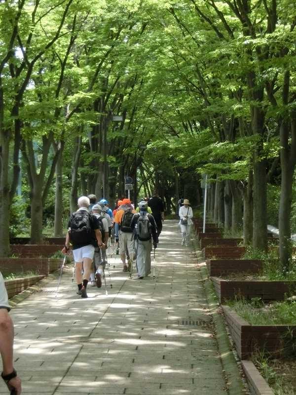 荏田南中学校横の木陰をウォーキング