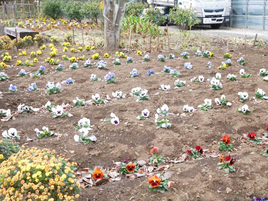 北八朔公園の手入れされた花壇