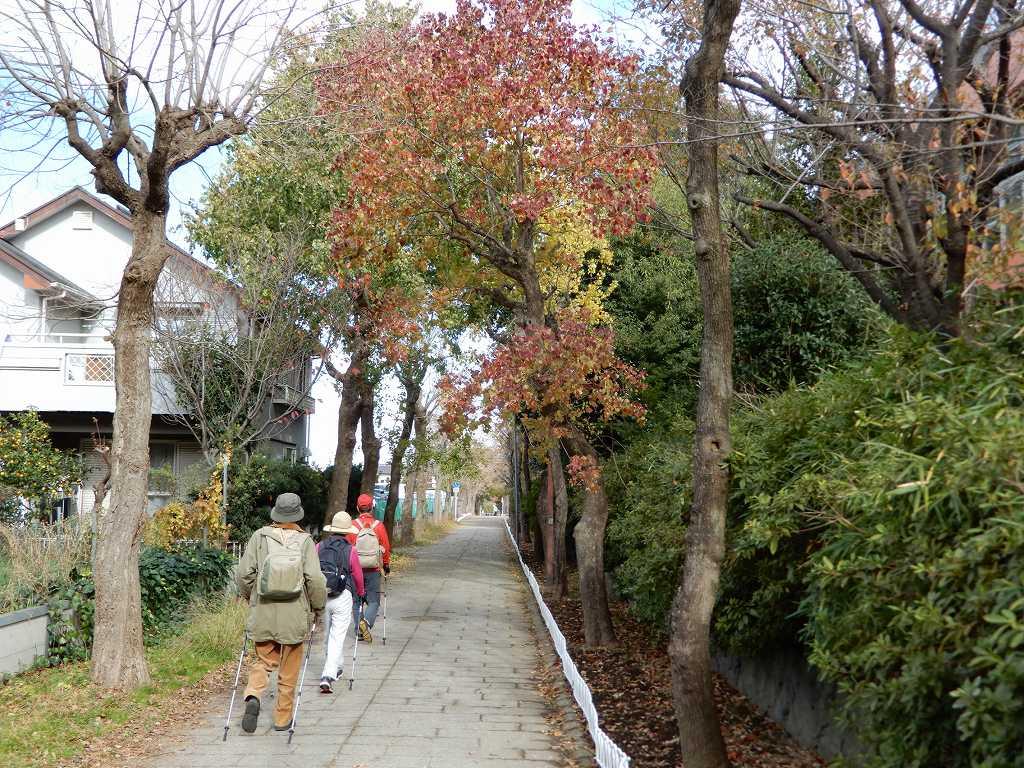 江田南中学校裏の黄葉を眺めつつウォーキング