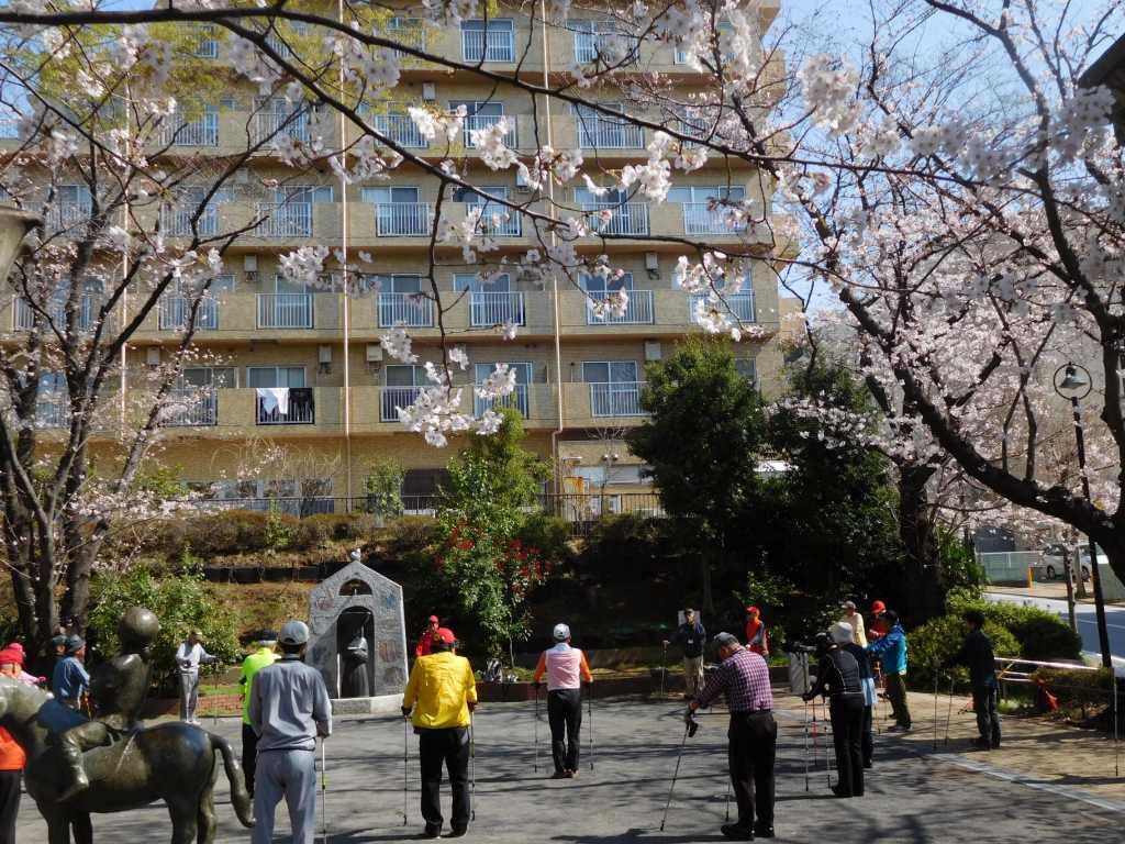桜咲く木の下でウォーミングアップ 満開には未だ早いようです