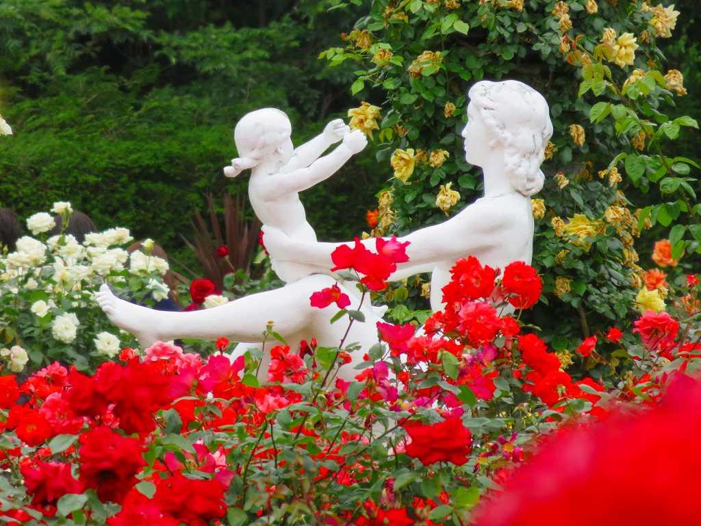 バラ苑の親子