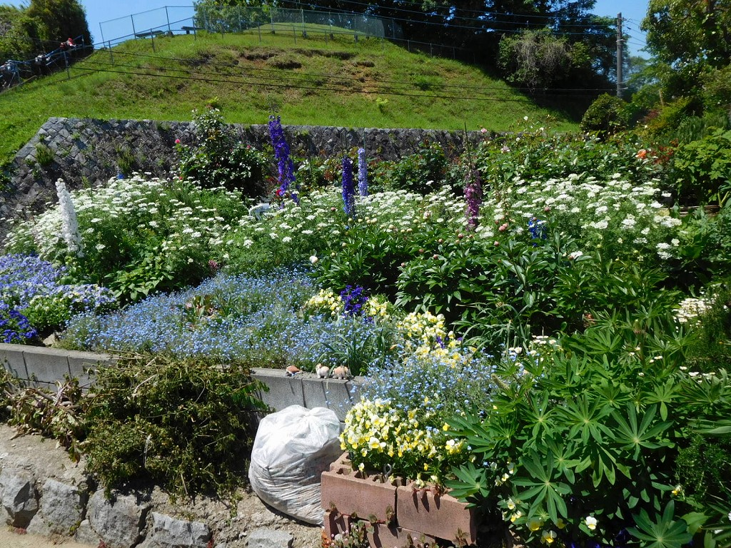 この御宅は何時来ても手入れされた花畑で楽しませて頂いてます