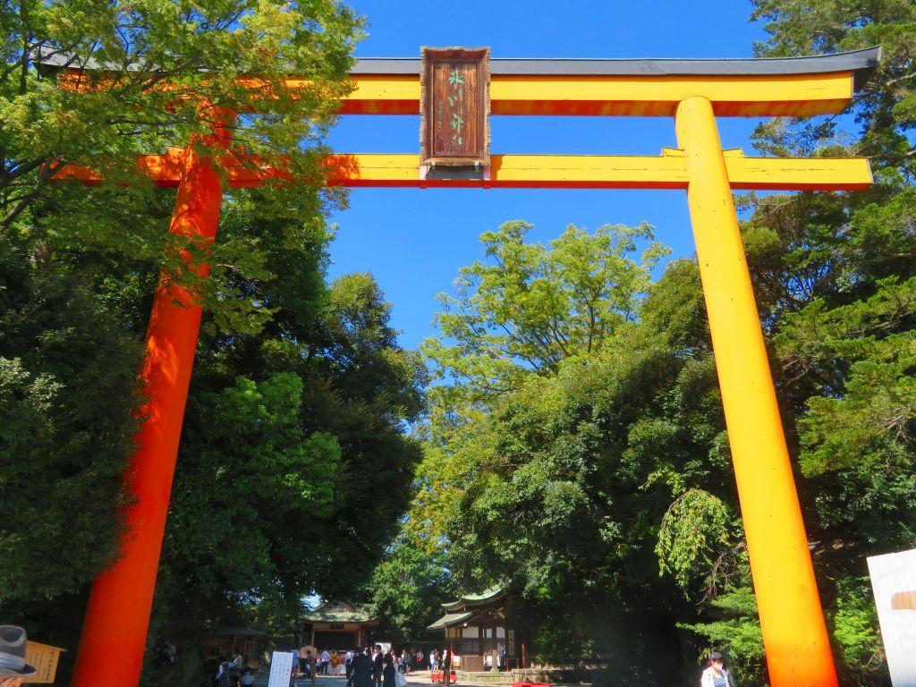 氷川神社大鳥居は木製では国内随一