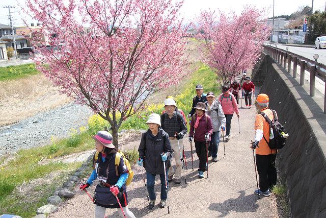 桜・菜の花を楽しみながらウォーキング