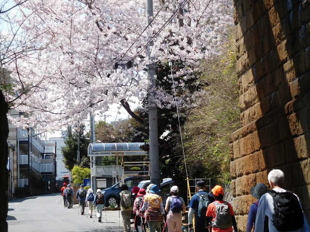 桜が綺麗ですね