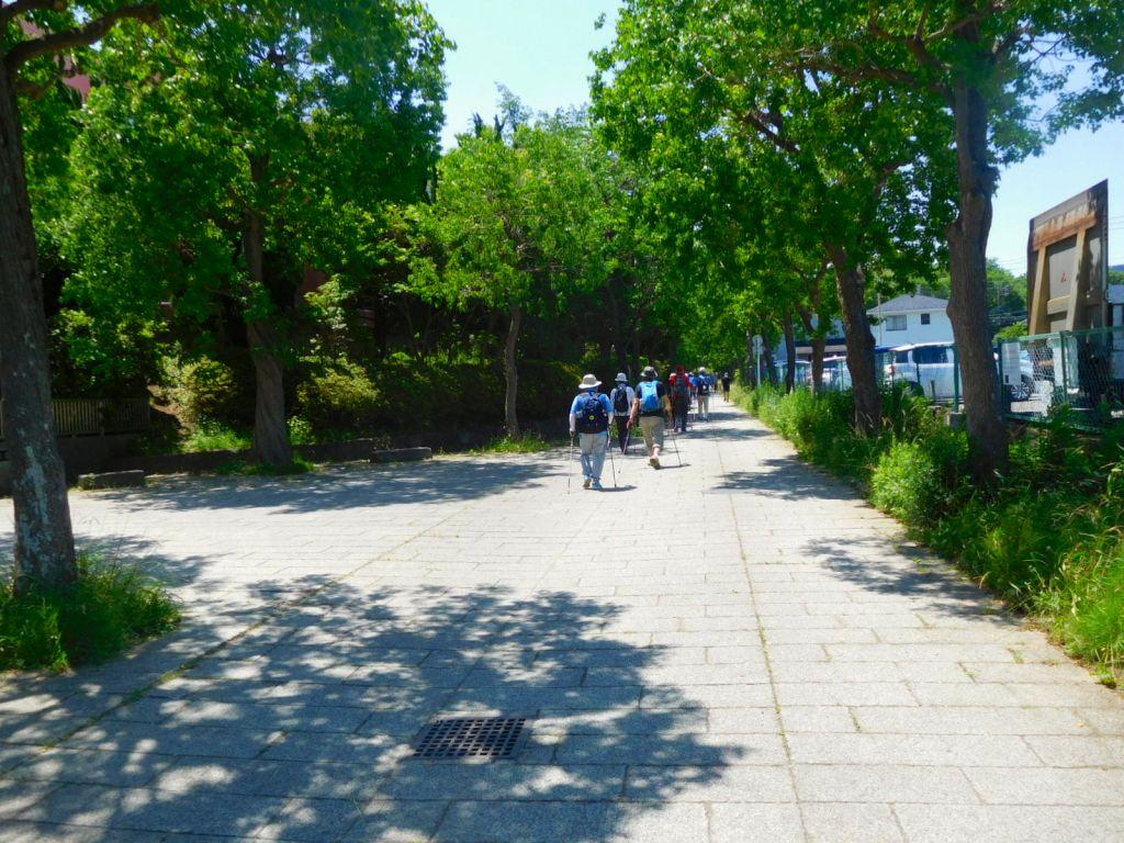 荏田南小学校・中学校横の木陰を歩く