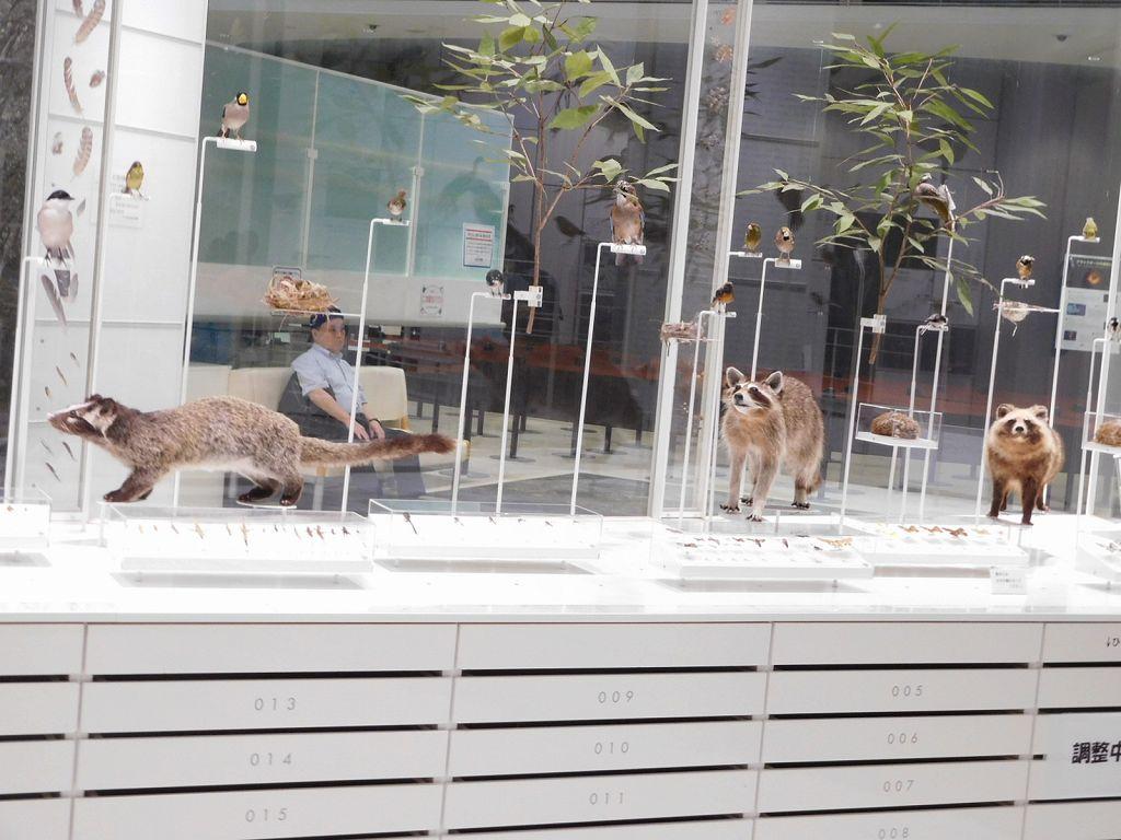 科学館の中 「狸」!! が此方を見ています