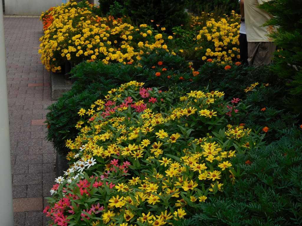 荏田駅北側の花壇も花が一杯です