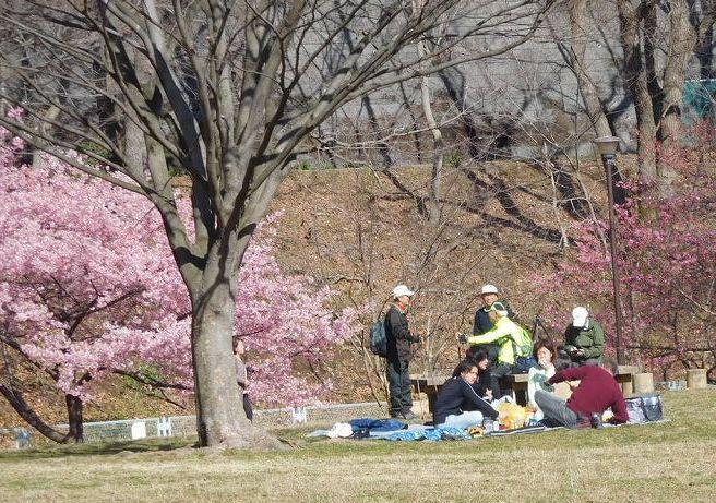 北八朔公園到着 既に花見客も楽しんでおられました