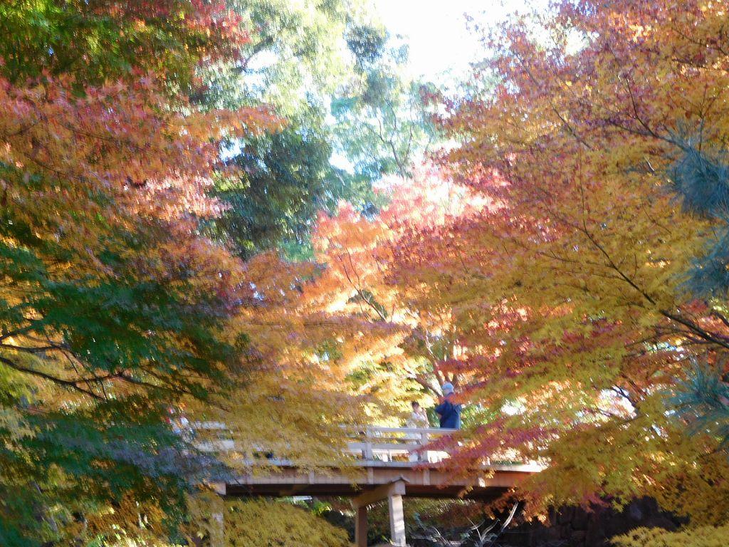 虎仙橋で「虎の尾」と呼ぶミニ渓谷に架かる檜造りの橋