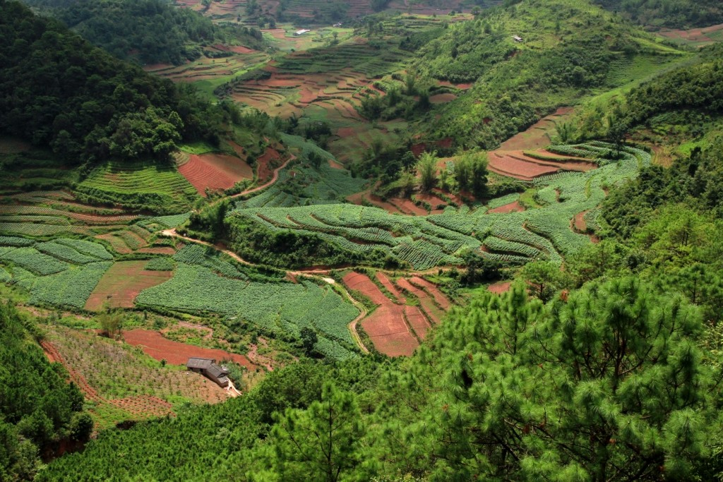 Les cultures en terrasses - Terraced fields