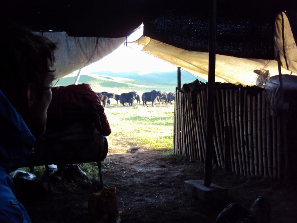 Depuis l'intérieur de la tente tibétaine