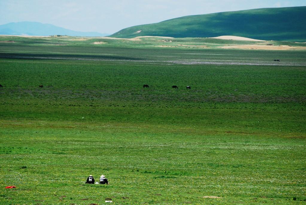 Trouver les deux hommes qui regardent leurs yacks paîsser