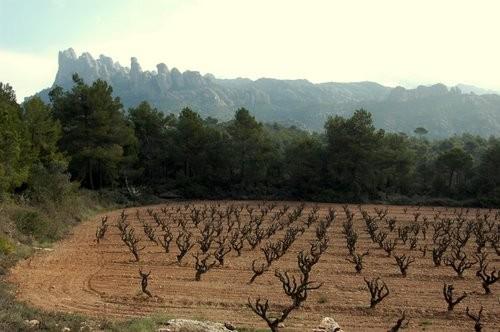 экскурсии на Монтсеррат, гора Монтсеррат, монастырь Монсерат и винные погреба, черная мадонна Монтсеррат, винные погреба в Барселоне, винные погреба в Испании