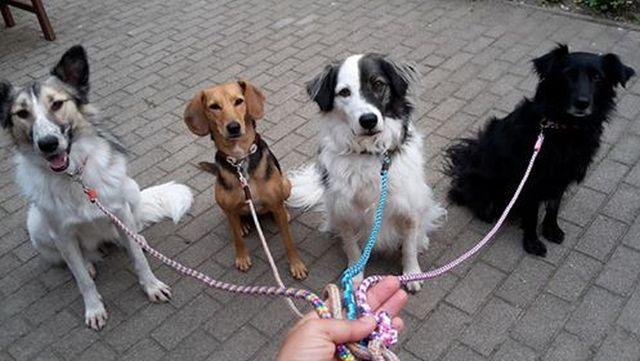 verschiedene Leinen von Hundeleinen-und-mehr
