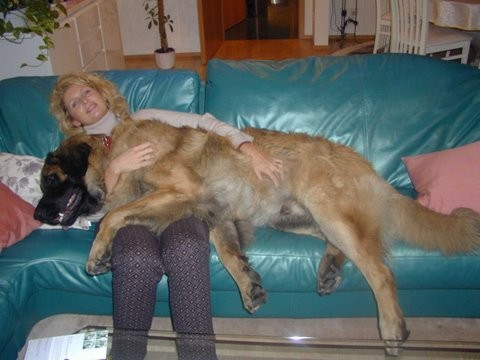 Raudi ein Leonberger 68kg schwer, verließ mich 2007