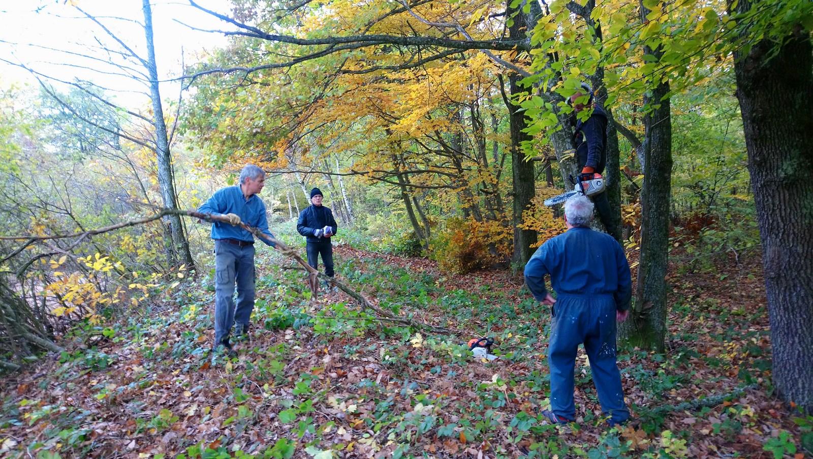Nettoyage des berges du Petit Albert, automne 2018