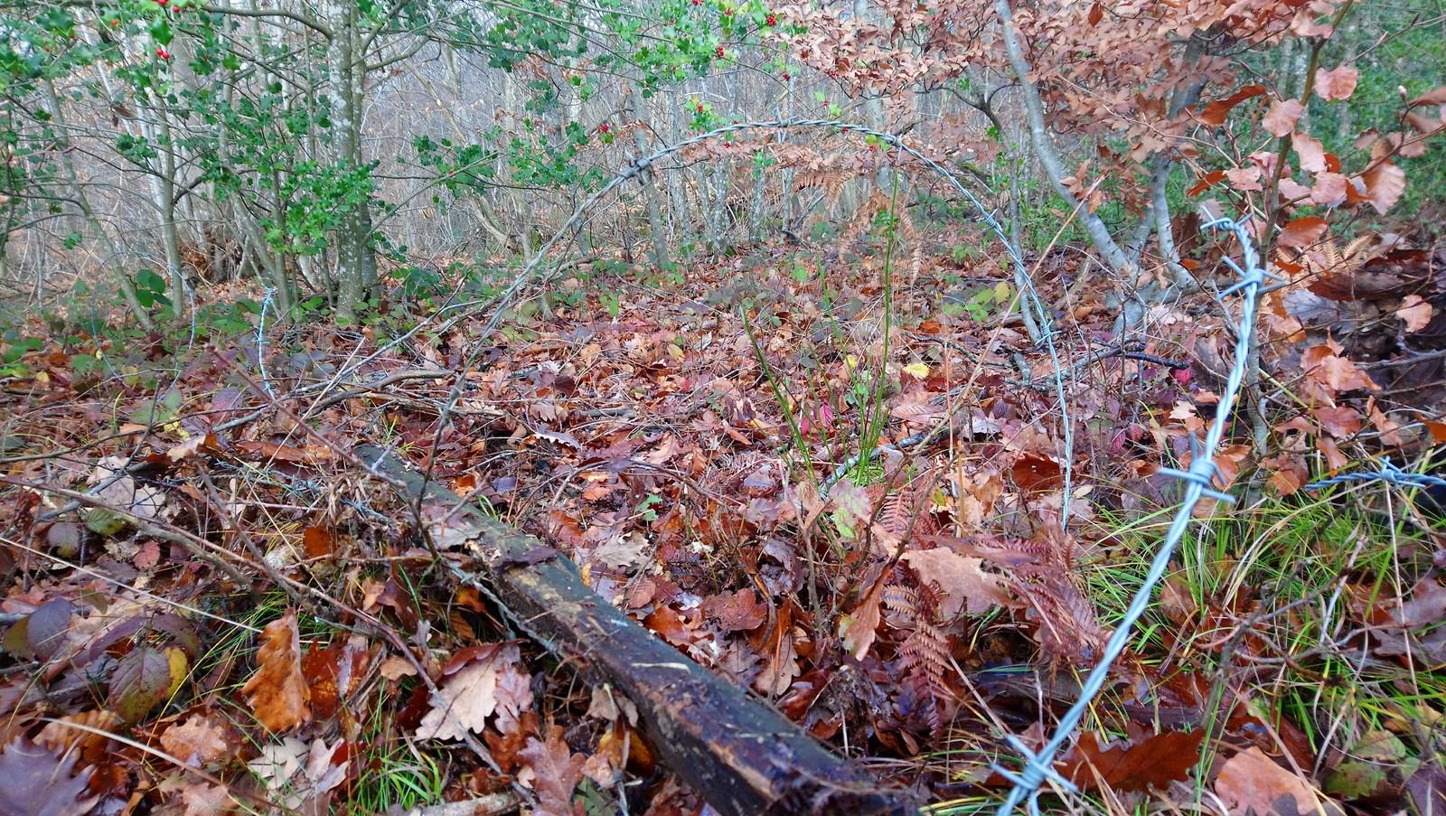 Barbelés dans les bois : un piège redoutable pour la faune
