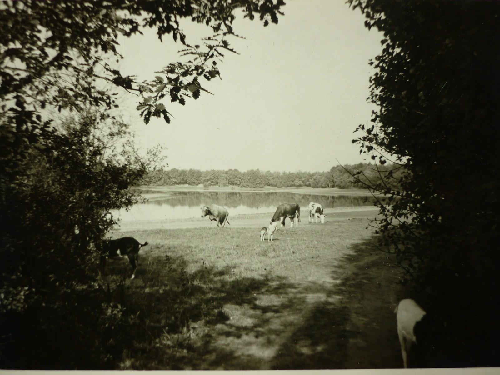 Dans les années 60, des vaches, déjà, au Grand Albert