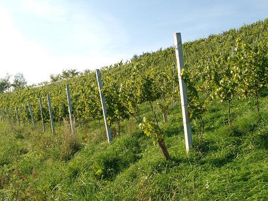 Weingarten Oberländer