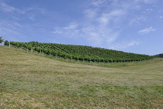 Weingarten Oberländer St. Paul