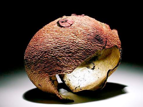 """""""Carapace"""" ronce de bruyère feuille d'or - h 12 cm - 2003"""