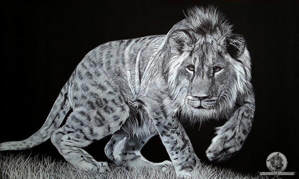 Le jeune lion2