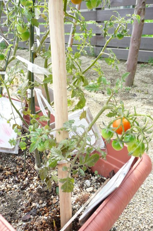 小さなプランターですが『ゆめの木菜園』です。