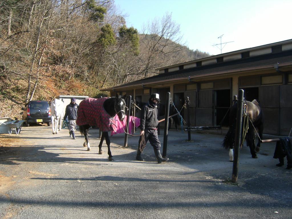馬場凍結のため、ひき馬です。。。