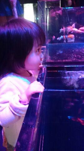かじめての展覧会でしたが 娘もノリノリで見ていました。金魚も好きだし