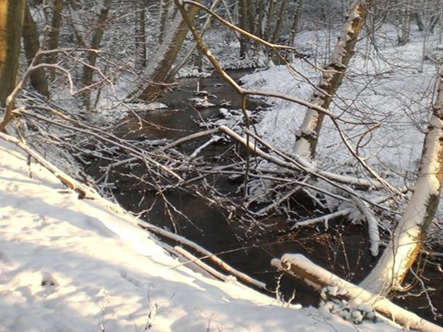 Pfälzerwald im Winter verschneit