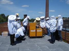 Akteure des Bienennetzwerkes Ruhrgebiet im Mai 2013 auf dem Dach der RAG MI