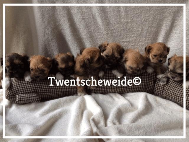 'verschillende boomer pups'