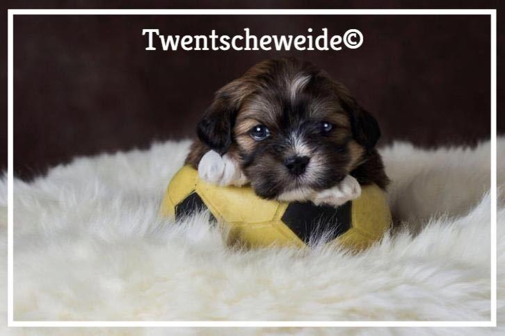 boomer-pups-enschede