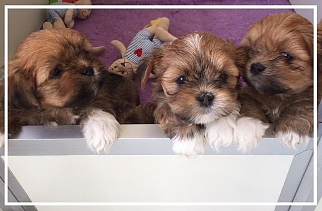 Vrolijke Mix Hondjes in huis geboren