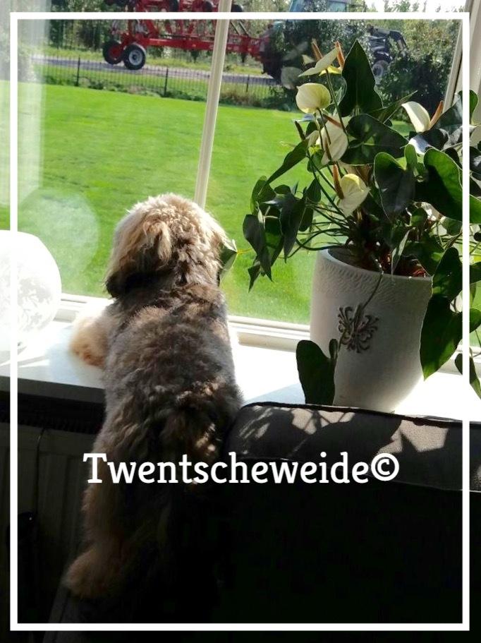 boomer-pups-te-koop-nederland