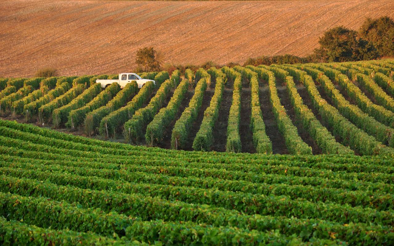 Le domaine les vins de menetou salon aoc domaine de l 39 ermitage - Menetou salon domaine de l ermitage ...