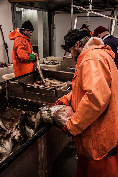 in der Fischfabrik